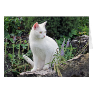 White Cat Nature Animal Photo Blank Greeting Card