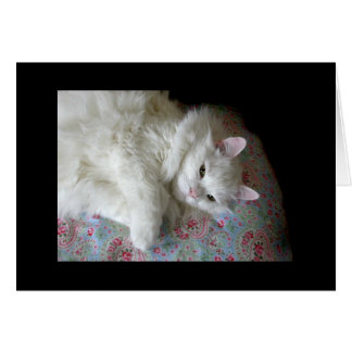 White cat on paisley quilt card