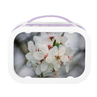 White Cherry Blooms Design Lunch Boxes