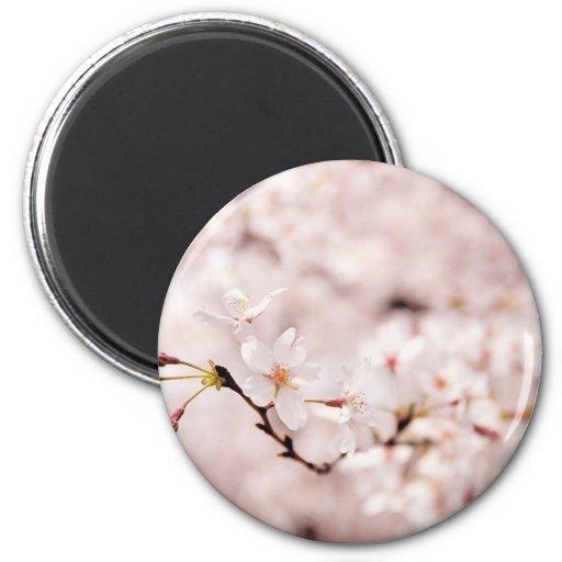 White Cherry Blossom Bokeh Magnet