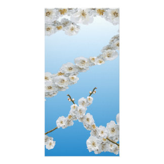 White Cherry Blossom Customized Photo Card