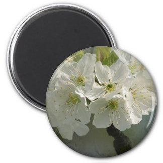 White Cherry Blossoms Magnet Refrigerator Magnet