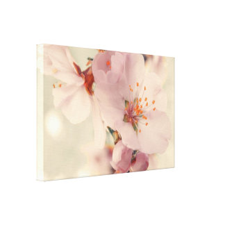 White Cherry Blossoms Spring Flowers Wall Art