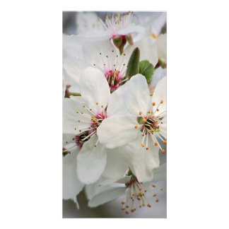 White Cherry Flower Customized Photo Card