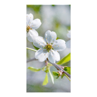 White Cherry Flower Photo Cards