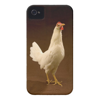 White Chicken Rooster Hen iPhone 4 Cover