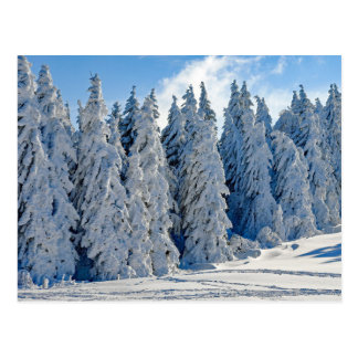 White Christmas Snowy pine trees forest postcard