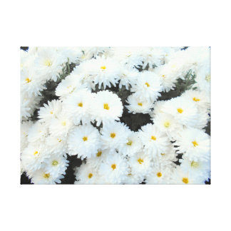 White Chrysanthemum Flowers Canvas Print