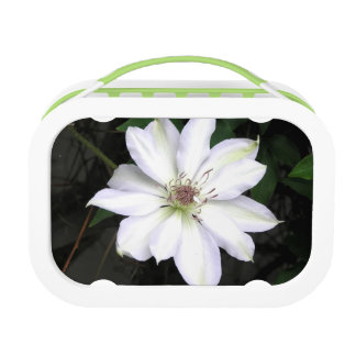 White Clematis Flower Lunch Box