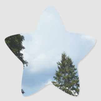 White Clouds in a  Blue Sky and Pine Tree Tops Star Sticker