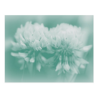 White Clover Wildflowers Post Cards