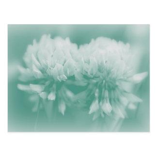 White Clover Wildflowers Postcard