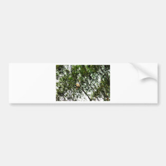 WHITE COCKATOO QUEENSLAND AUSTRALIA BUMPER STICKER