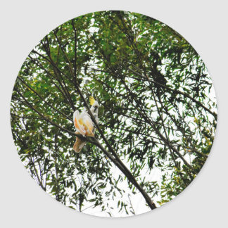 WHITE COCKATOO QUEENSLAND AUSTRALIA CLASSIC ROUND STICKER