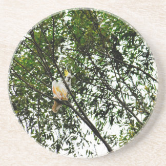 WHITE COCKATOO QUEENSLAND AUSTRALIA COASTER