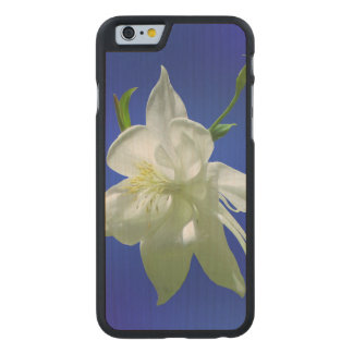 White Columbine on Blue Carved Maple iPhone 6 Case