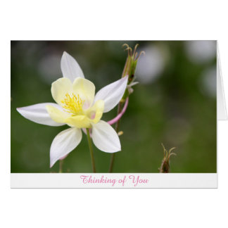 White Columbine Thinking of You Card