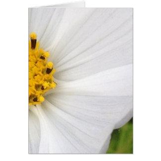 White Cosmos Flower Closeup Blank Greeting Card
