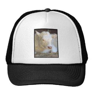 White Cow Hat