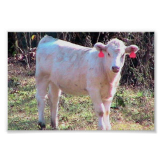 White Cow With Tagged Ears In A Wide Meadow Print