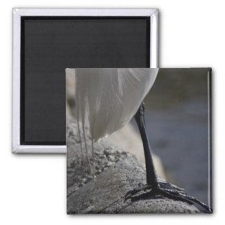 White Crane Bird Feet Photo Magnet