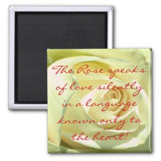 White Cream Rose Magnet