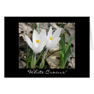 "'White Crocus"" Card"
