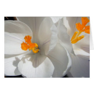 White Crocus Card