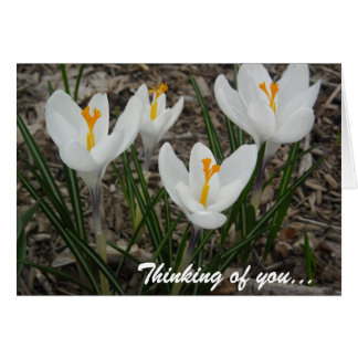 White Crocuses Card