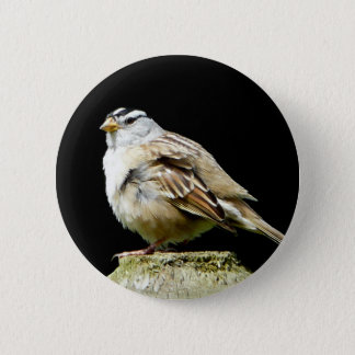 White Crowned Song Sparrow 6 Cm Round Badge