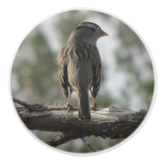 White-crowned Sparrow Ceramic Knob
