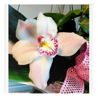 White Cymbidium Orchid Acrylic Wall Art