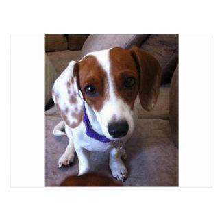 white dachshund postcard