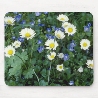 white Daisies flowers Mousepads