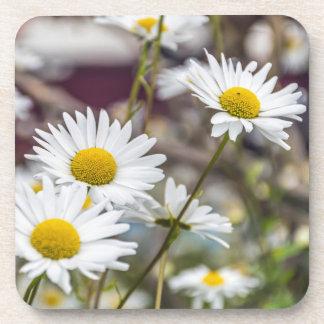 White daisies hard plastic coasters