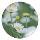 White Daisies in a Field - Customised Daisy Plate