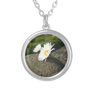 White daisies lying on the stone at sunset silver plated necklace