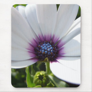 White Daisy - 1 Mouse Pad