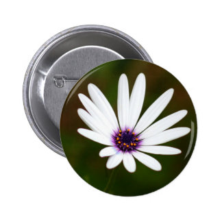 White daisy button