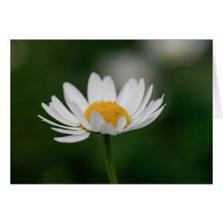 White daisy card
