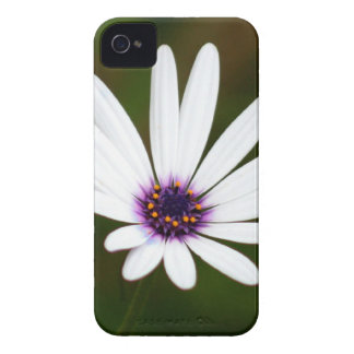 White daisy iPhone 4 Case-Mate cases