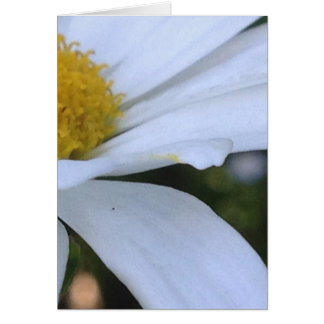 White Daisy Closeup Blank Greeting Card
