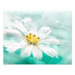 White Daisy Flower Blue Water Pond Aqua Turquoise Art Photo