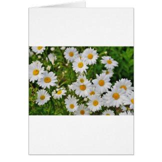 White Daisy Flower Card