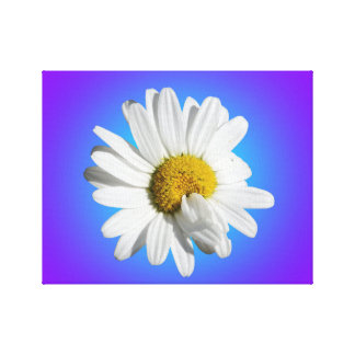 White Daisy Flower Floral Purple Blue Gradient Canvas Print