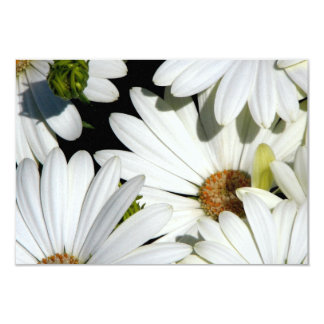 White Daisy Flowers Card