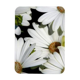 White Daisy Flowers Magnet