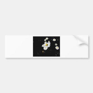 White daisy flowers on dark background bumper sticker