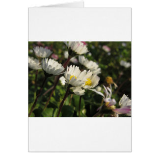 White daisy flowers on green background card