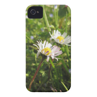 White daisy flowers on green background Case-Mate iPhone 4 cases